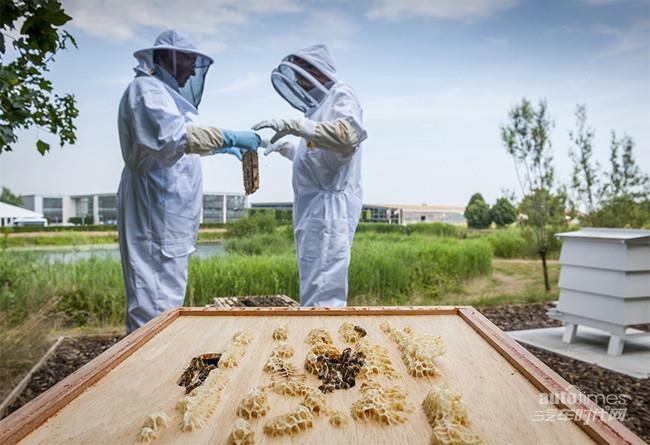 劳斯莱斯汽车养蜂场项目助力保护英国蜜蜂种群【汽车时代网】
